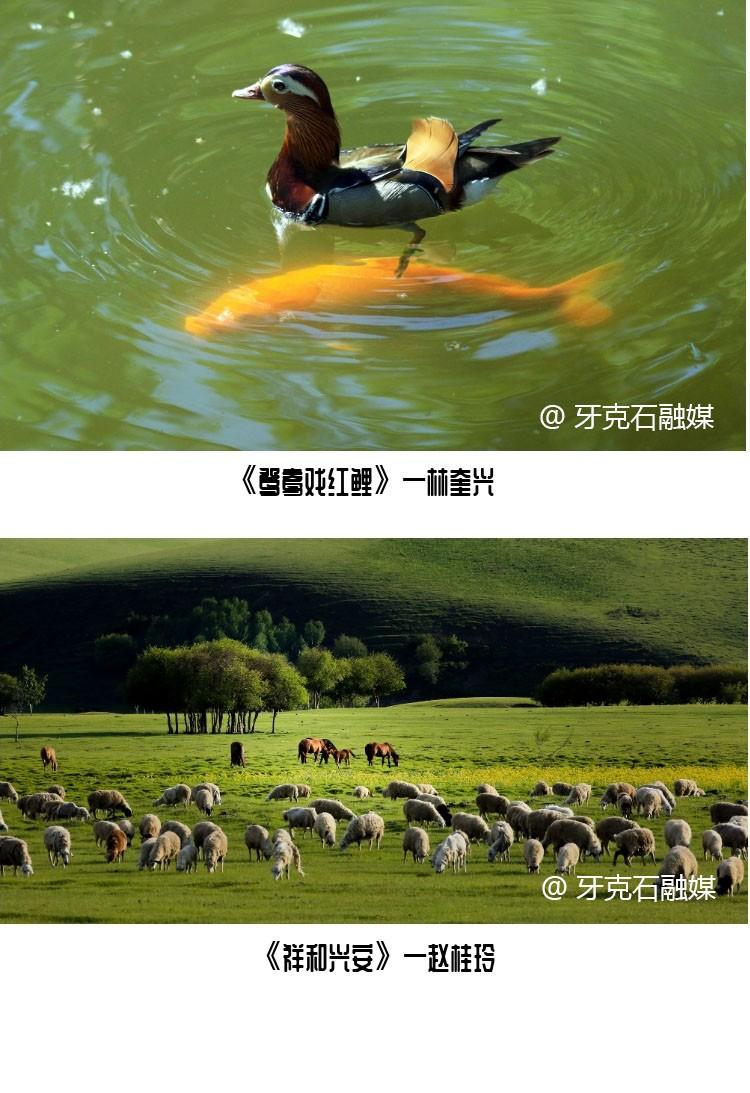 绿色农畜林产业摄影展·畜牧业篇